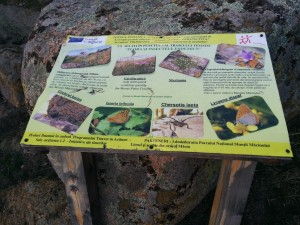 Flora și insectele endemice
