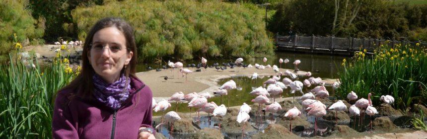 Flamingo fără număr