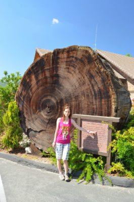 Copacul de la hotel